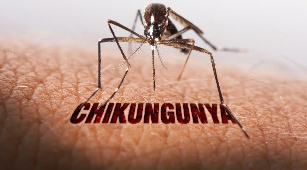 chikungunya-in-india