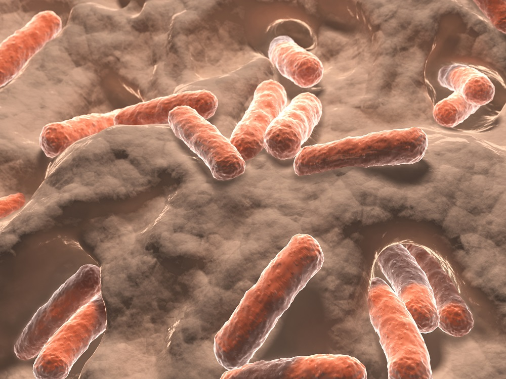 Gut Bacteria as an Anti - Aging Agent